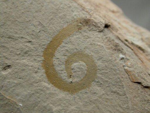 Utah fossil