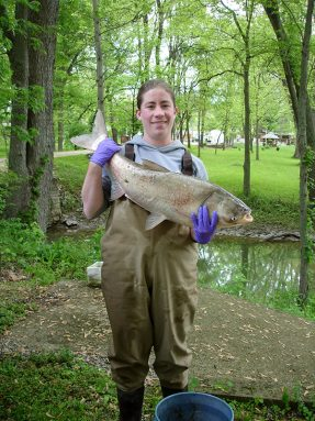 Alison Coulter has studied where Asian carp can reproduce. Here, she's holding a silver carp. Credit: M. Gunn