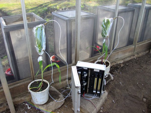 Equipment collects volatile chemicals being emitted from both healthy and damaged corn plants. Credit: Zeyaur R. Khan