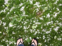 In June 2010, a powerful hailstorm pummeled the city of Bozeman, Mont. The hailstones were as large as golf balls, and they inspired a local scientist to peek inside and look for bacteria.