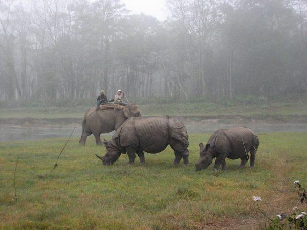 elephant back rhinos
