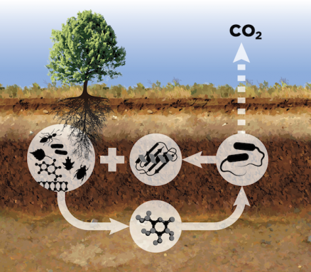 rot carbon cycle