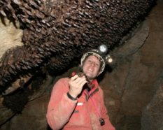 Gregory Turner, an endangered-mammal specialist with the Pennsylvania Game Commission, stands beneath a carpet of some 5,500 healthy Virginia big-eared bats in Hellhole Cave, W.Va. This photo was taken prior to the arrival of white-nose syndrome in the cave.