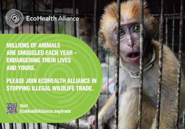 This ad is on display in airports in New York City to create awareness about the dangers of bringing illegal wildlife into the United States. Often animals that are threatened, endangered or otherwise protected are imported for sale as pets or food. Credit: EcoHealth Alliance