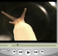 snail_video.avi