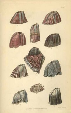Charles Darwin studied many different kinds of plants and animals, including barnacles (illustration shown above), pigeons, orchids, beetles and carnivorous plants.