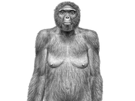 An artist's interpretation shows how a 4.4-million-year-old female Ardipithecus might have looked.