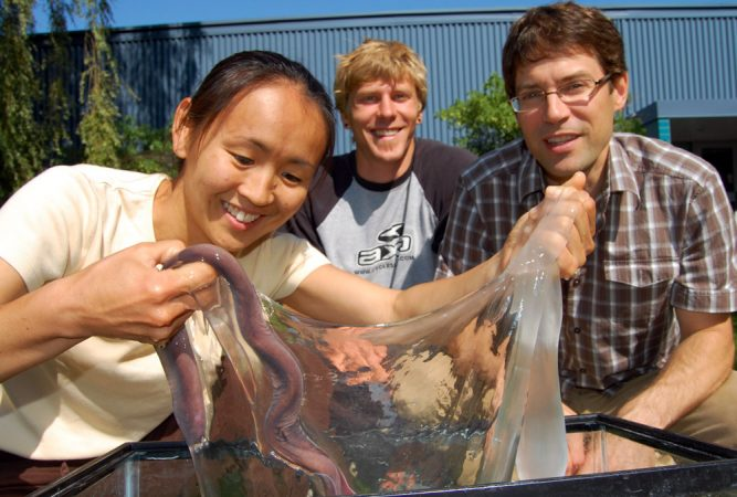 Scientist Atsuko Negishi holds a hagfish in one hand and its slime in the other. She studies the ooze in the lab of materials scientist David Fudge, at far right. Credit: Andra Zommers/University of Guelph