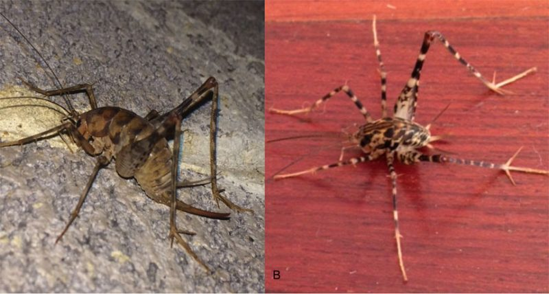Citizen Scientists On Camel, How To Catch Crickets In Basement