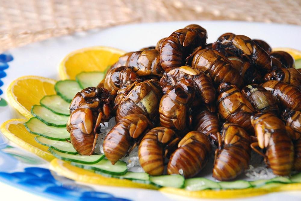 a plate of cicadas