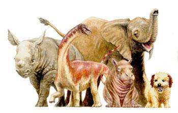 baby titanosaur