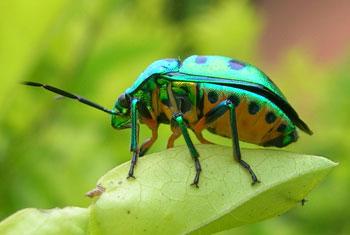 beetle shiny