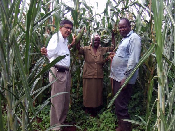 Zeyaur Khan, left, visits a farming couple in western Kenya. The farmers grow corn using the Push-Pull system. It relies on the natural ability of plants to fend off insect pests. Credit: Zeyaur R. Khan