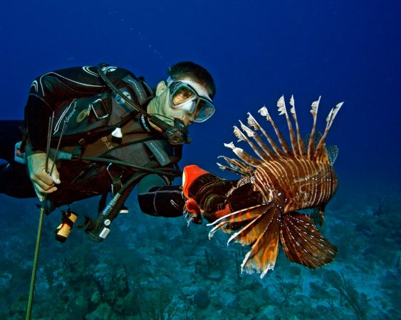 Lad Akins carefully grasps a football-sized lionfish. Its spines can release a very painful venom. Credit: Ned DeLoach