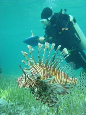 During a dive, Stephanie Green takes notes on the lionfish invading U.S. waters. Credit: REEF