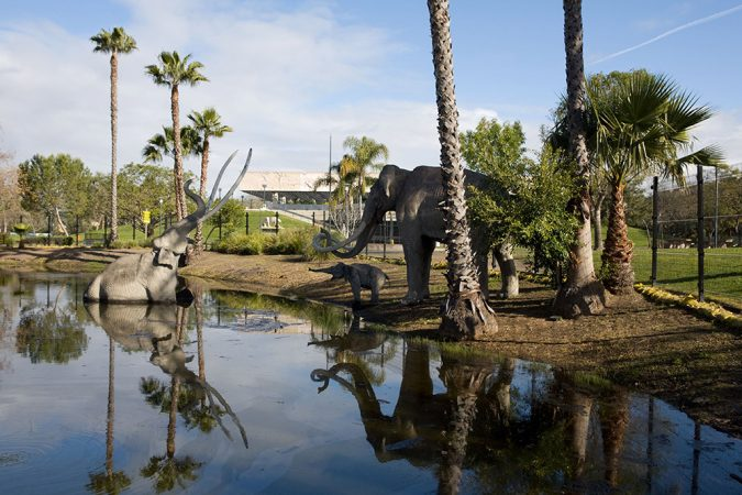 The La Brea tar pits were once located several miles from downtown Los Angeles, but the city has grown. Now the tar pits (one shown here with a model of a mammoth family) are part of a park in the city. Credit: Page Museum at the La Brea Tar Pits