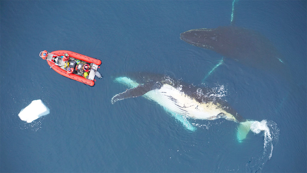 Whales live large. But why?