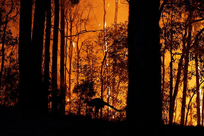 Gosper's Mountain Fire
