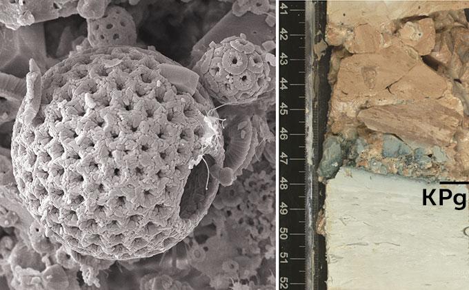 calcareous plankton