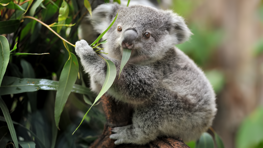 Scientists Say: Herbivore   Science News for Students