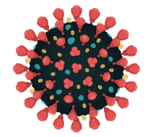 an illustration of spike proteins on the outside of a coronavirus