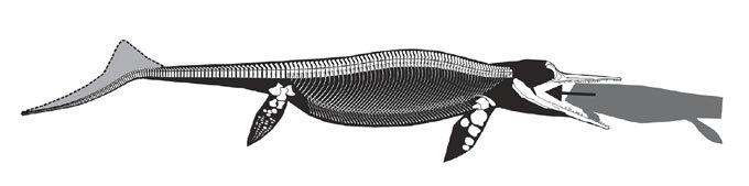 ichthyosaur illustration