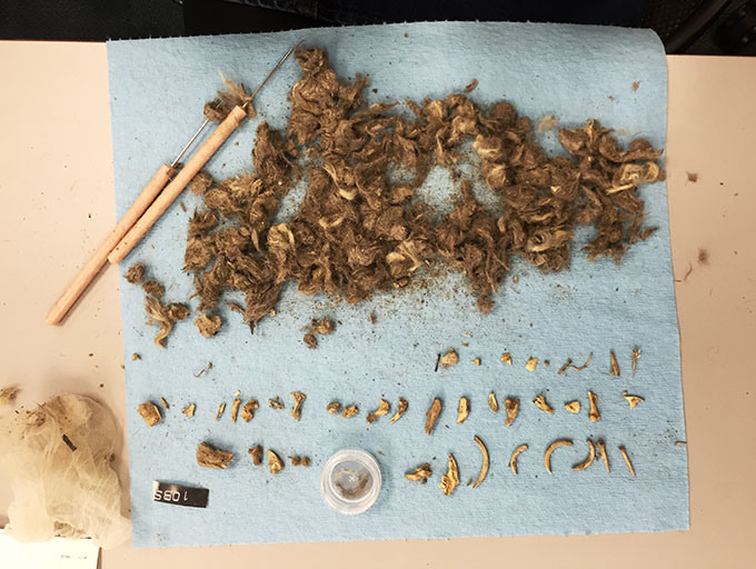 a photo of dissected coyote scat