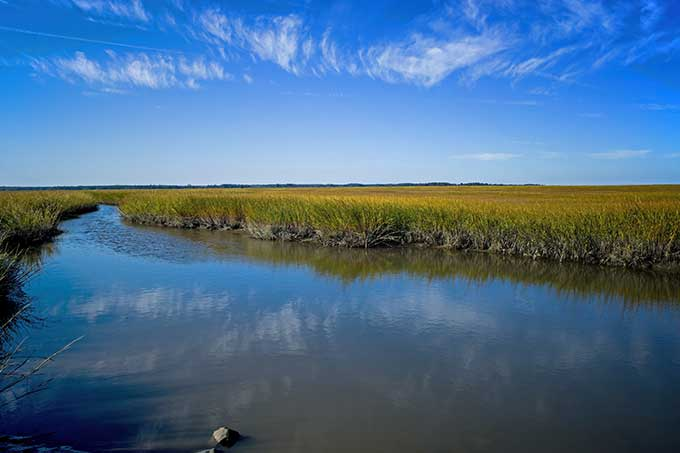a salt marsh along the coast of Delaware