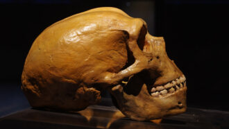 Some Neandertal genes may up the risk of severe COVID-19