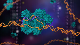 2020 chemistry Nobel goes for CRISPR, the gene-editing tool