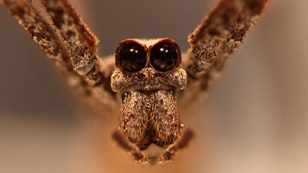 102720 cs spider feat 1028x579