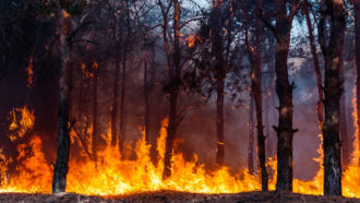 Trees power this alarm system for remote forest fires