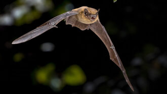 Here's what bats 'see' when they explore the world with sound