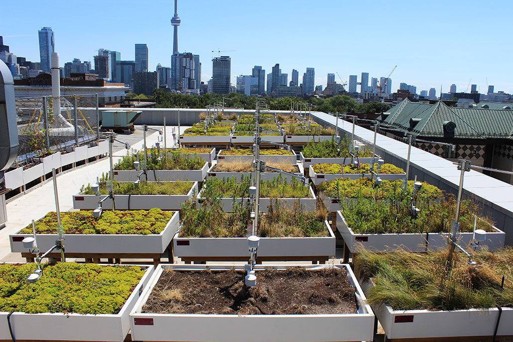 a photo of rooftop gardens