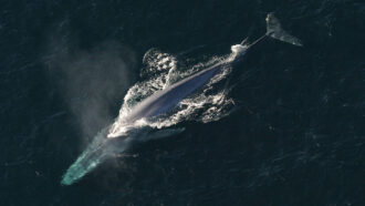 Whales get a second life as deep-sea buffets