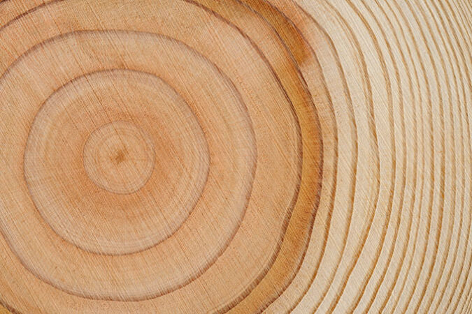 a photo of tree rings