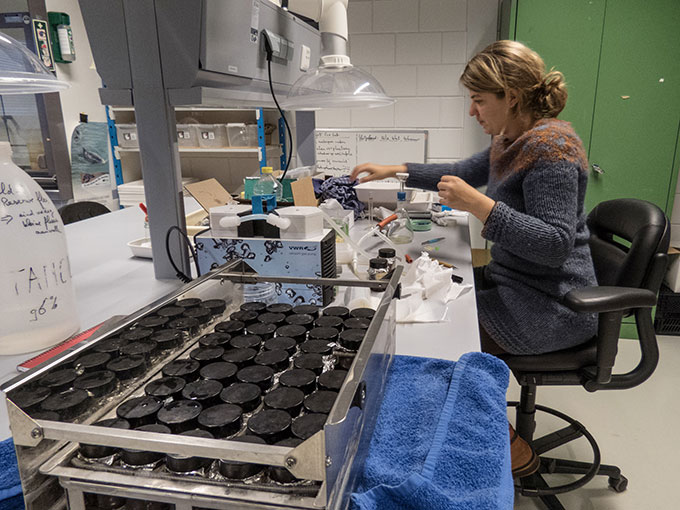 Susanne Kühn in the lab extracting plastic additives from oil