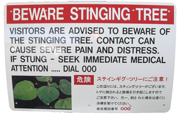 """a sign that reads """"BEWARE STINGING TREE"""""""