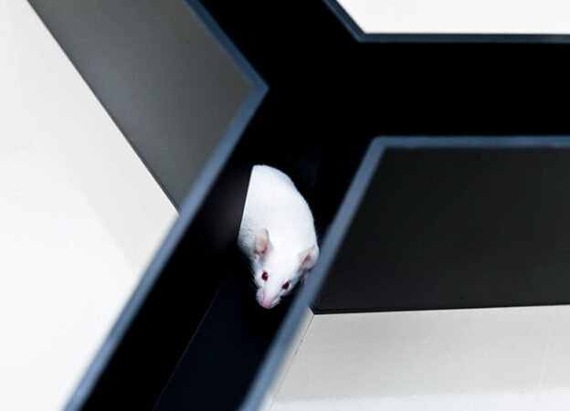 a mouse in a maze