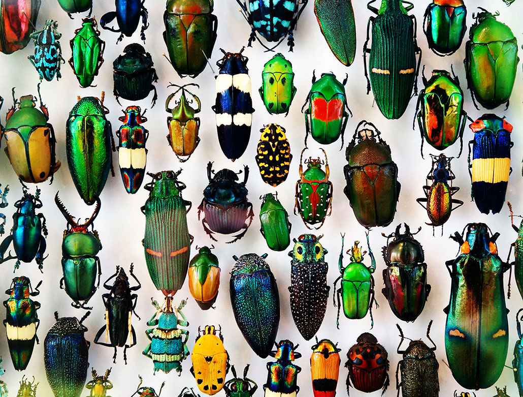 a bunch of brightly colored beetle specimens