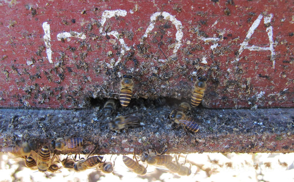 a red honeybee hive with a large amount of animal dung at the entrance