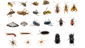Explainer: Insects, arachnids and other arthropods