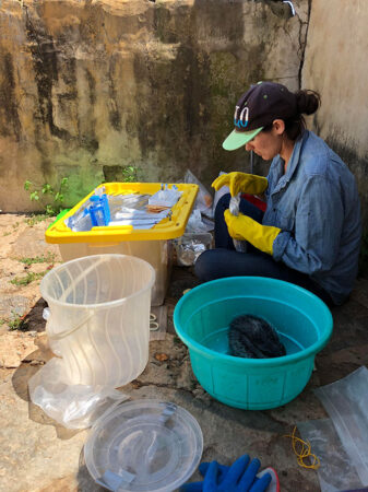 Sara Weinstein collecting samples from a rat in a blue tub