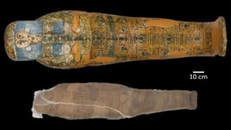 Unusual mud shell covers an Egyptian mummy