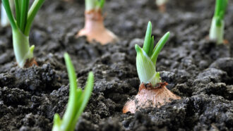 Healthy soils are life-giving black gold