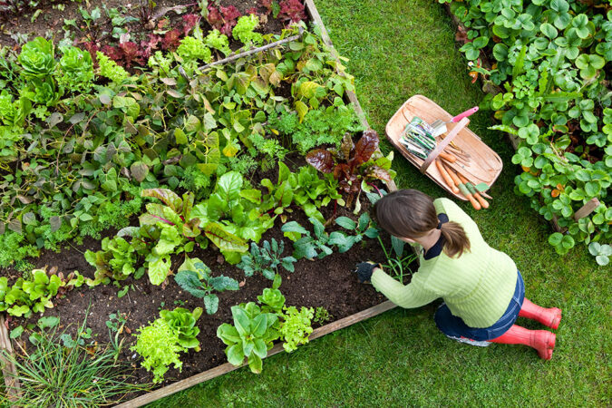 an overhead photo of a woman weeding a garden