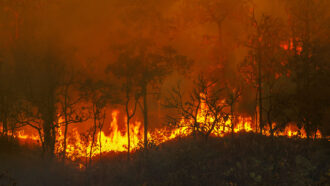 Can wildfires cool the climate?
