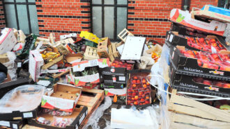 The world wastes roughly a sixth of the food produced each year