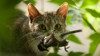Analyze This: Invasive species cost the world billions each year
