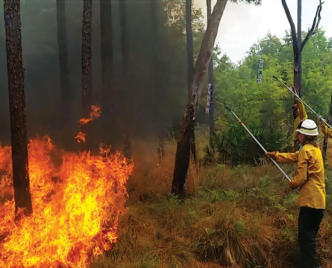 student holding a long pole with a petri dish on the end to collect a sample form a prescribed fire